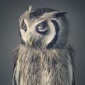 Tim Flach - More Than Human - Owl I