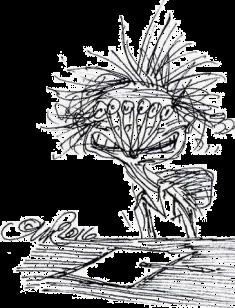 skrivepolaps pr. ovelse II